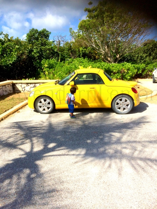 That's Lime exploring the yellow cooper